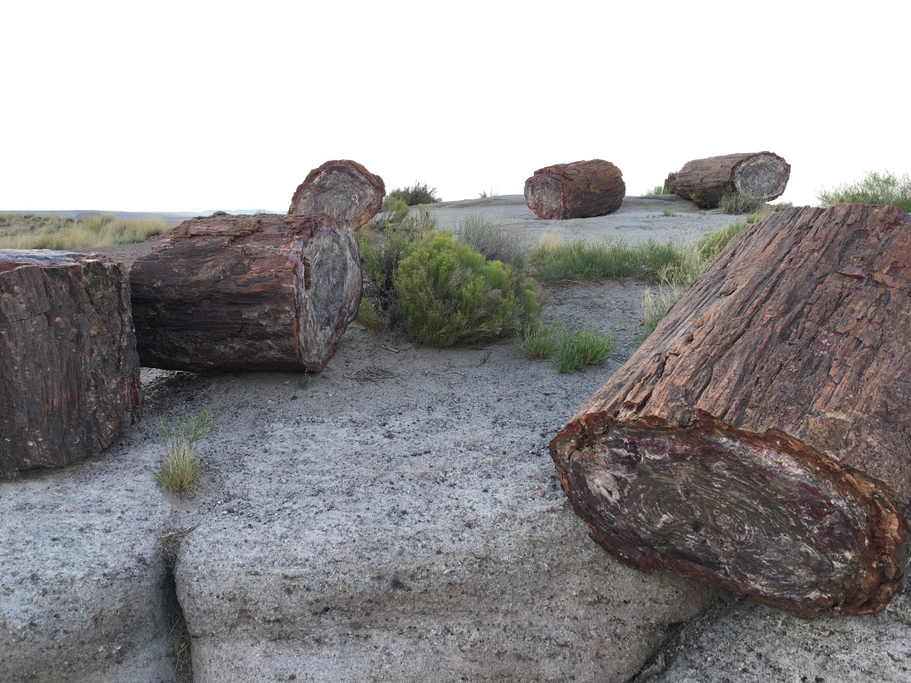 Petrified Forest National Park | Photo: Tom Tash/Chimani