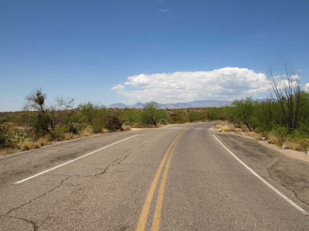 Cactus Forest Drive in Saguaro National Park | Photo Courtesy of NPS
