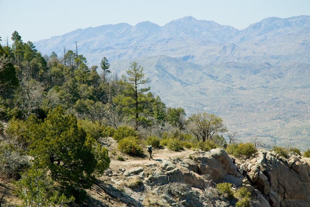 Saguaro National Park | Photo Courtesy of NPS