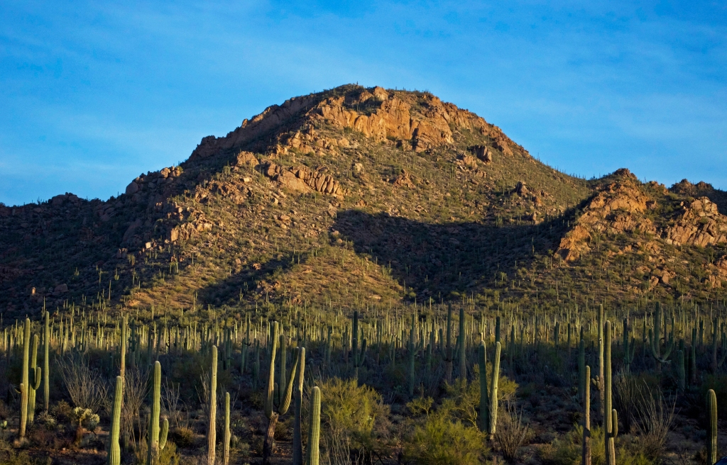 Saguaro National Park | Photo Courtesy of NPS