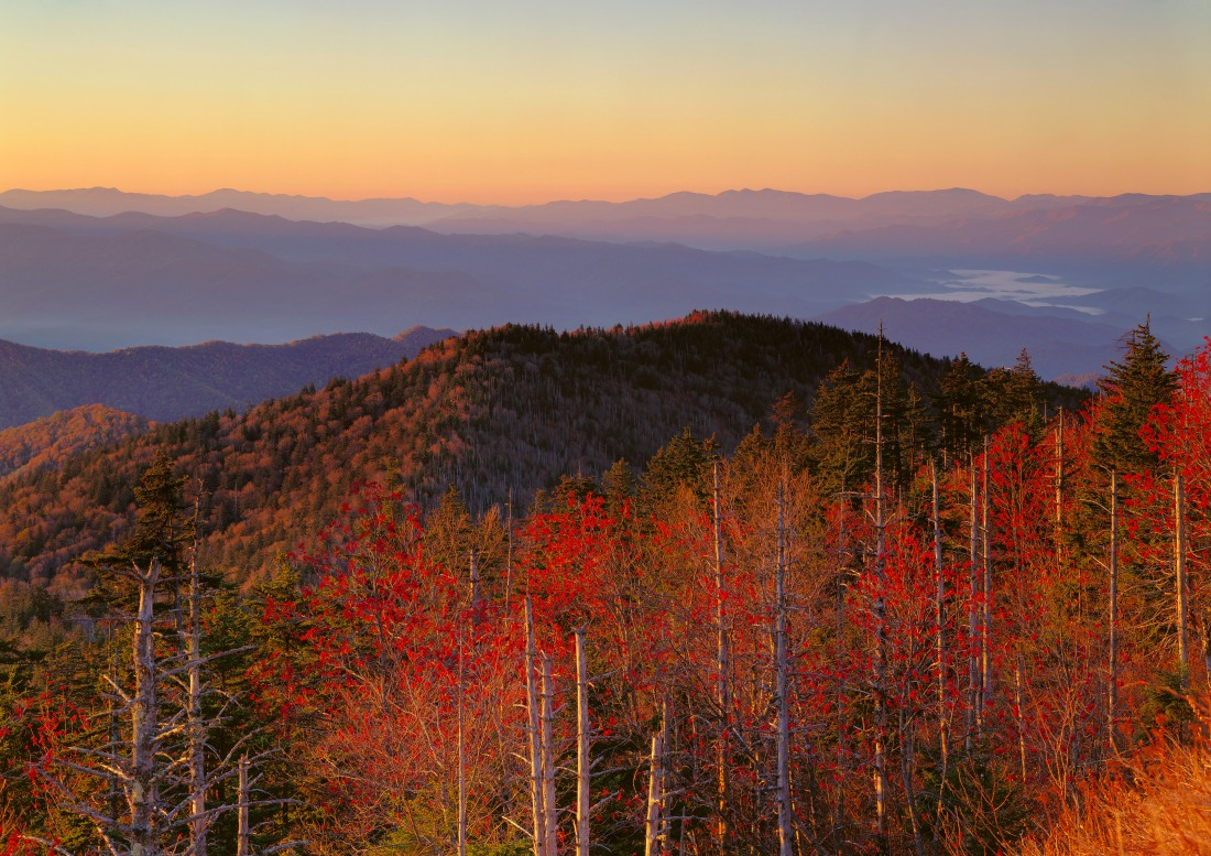 Trees in fall foliage and ridges from Clingman's dome at sunrise, North Carolina. Great Smoky Mountains National Park